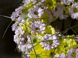 Черенки хризантем