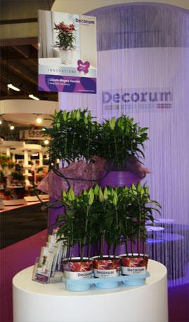 Выставка цветов в Голландии