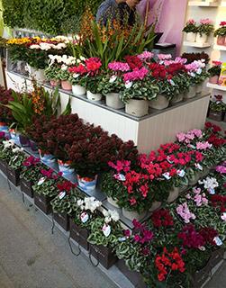 купить свежие цветы