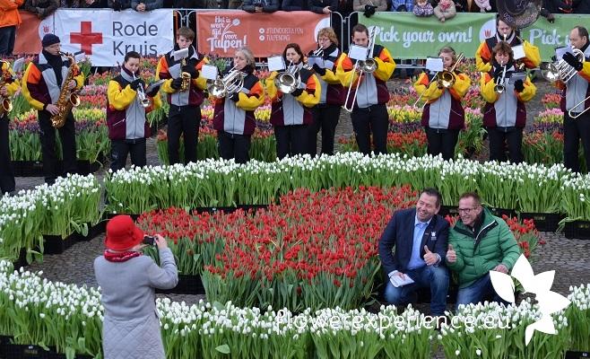 Тюльпаны на выгонку