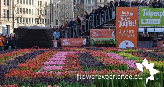 Тюльпаны Голландии