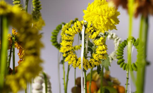 хризантемы фото купить хризантему