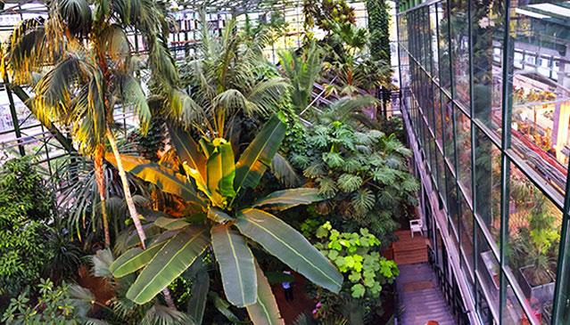 Аптекарский огород на проспекте Мира