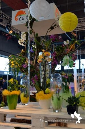 голландские производители цветов