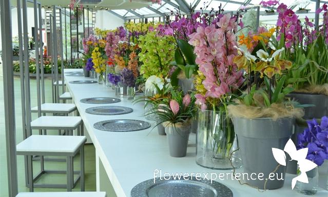 голландские производители цветов, Кекенхоф