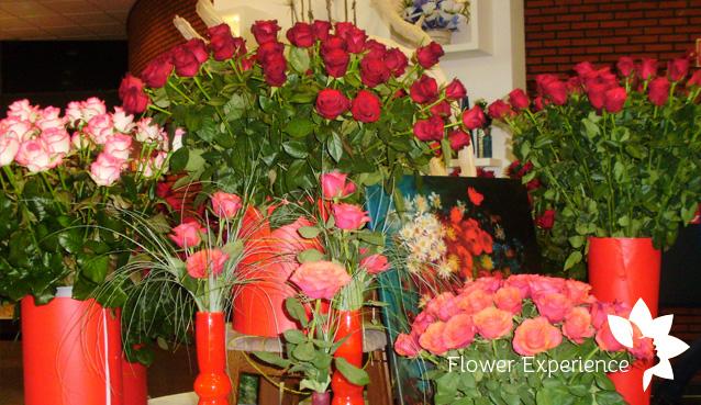 голландские розы фото