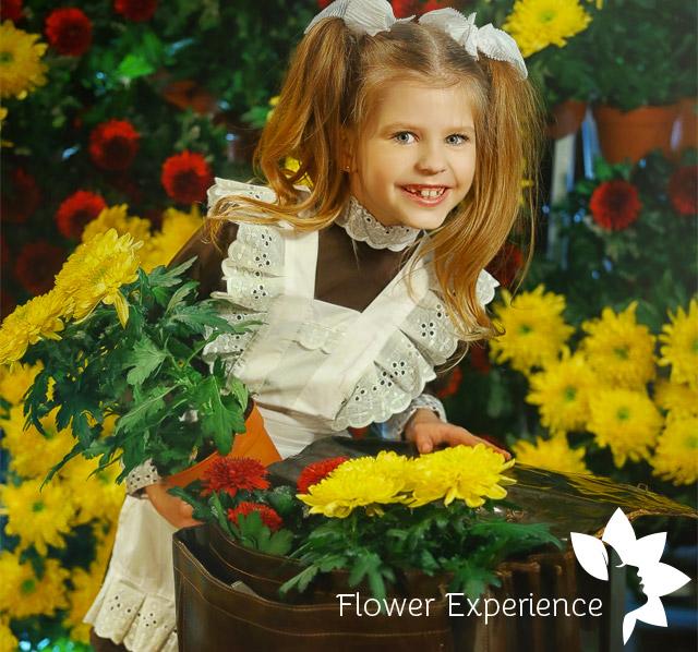 купить горшечный цветок