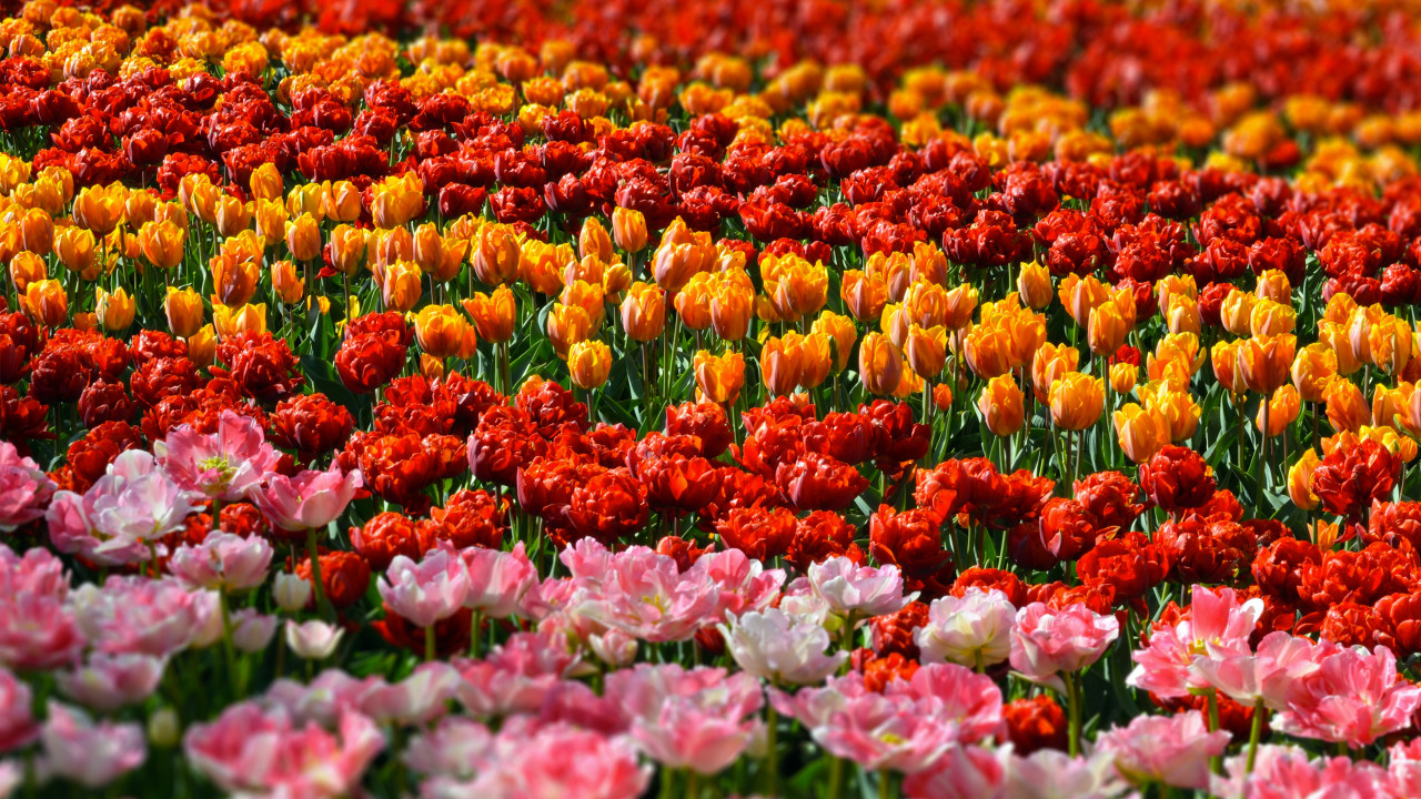 Flower Experience: цветочный взгляд на мир