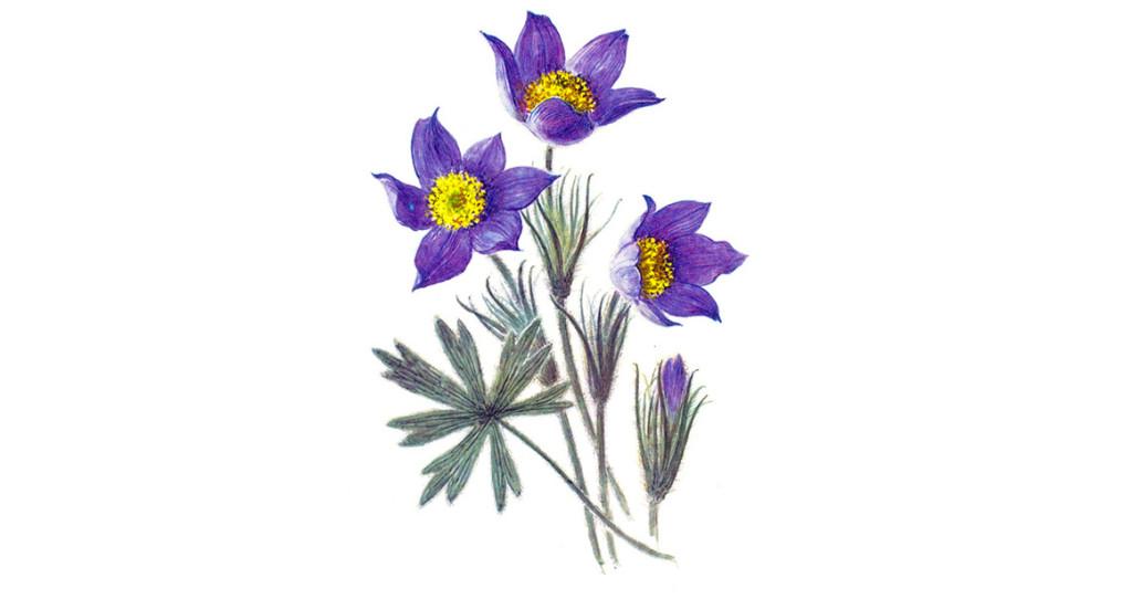Уникальные первоцветы