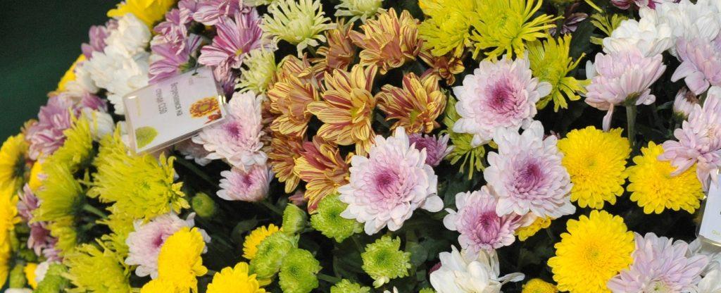 ЦветыЭкспо