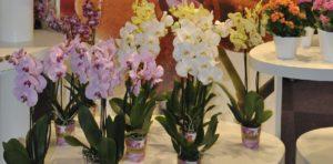 ЦветыЭкспо в Крокусе