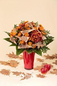 Хризантемы из Голландии