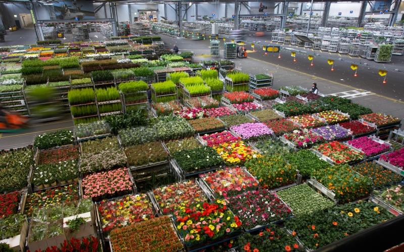 Доставка цветов и подарков в роттердаме нидерланды 98