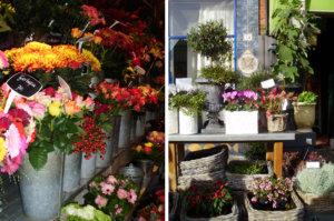 Цветы из Голландии