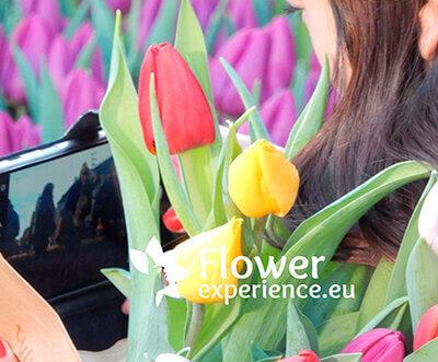 День тюльпанов