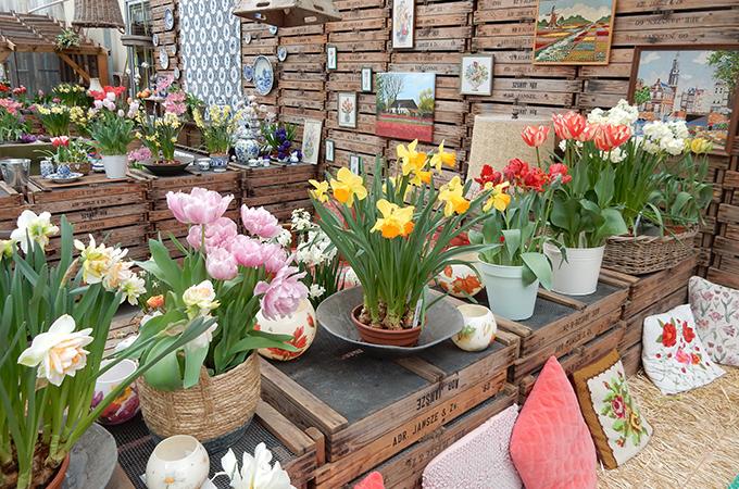 бизнес вокруг тюльпанов